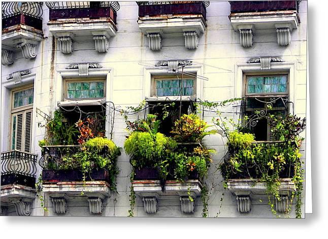 Havana Windows Greeting Card by Karen Wiles