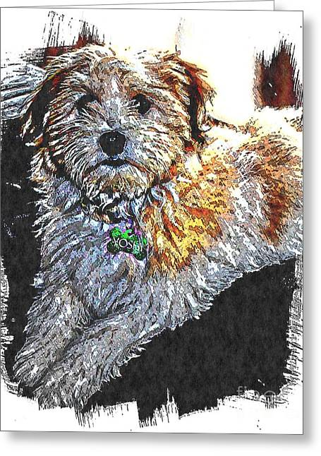 Playfulness Digital Art Greeting Cards - Havanese Puppy Greeting Card by Barbara Griffin