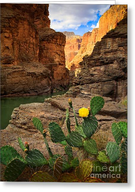 Havasu Cactus Greeting Card by Inge Johnsson