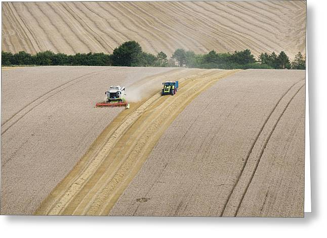 Harvest Time Greeting Cards - Havest time Greeting Card by Steven Poulton