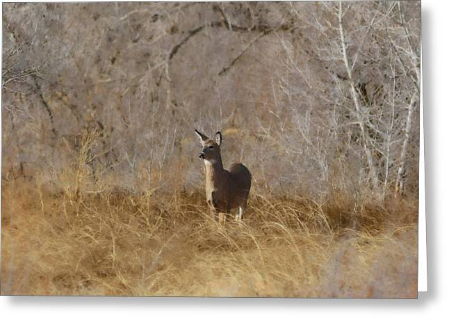 Fountain Creek Nature Center Greeting Cards - Having a Look Greeting Card by Ernie Echols