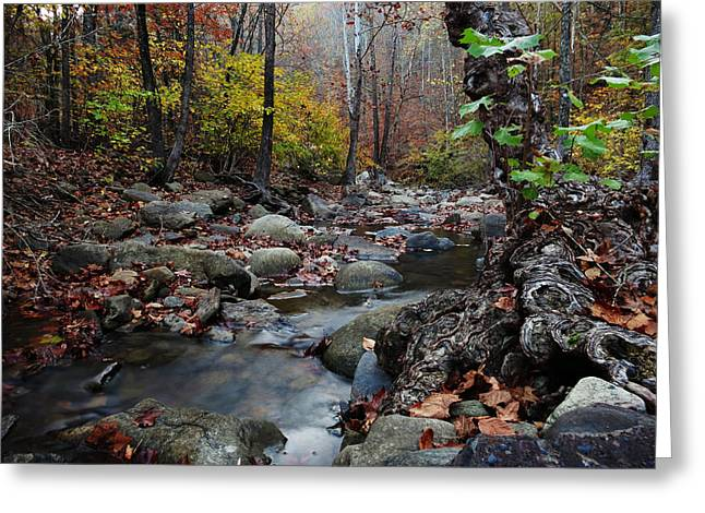 Tree Roots Photographs Greeting Cards - Haw Creek Autumn  Greeting Card by Matthew Parks