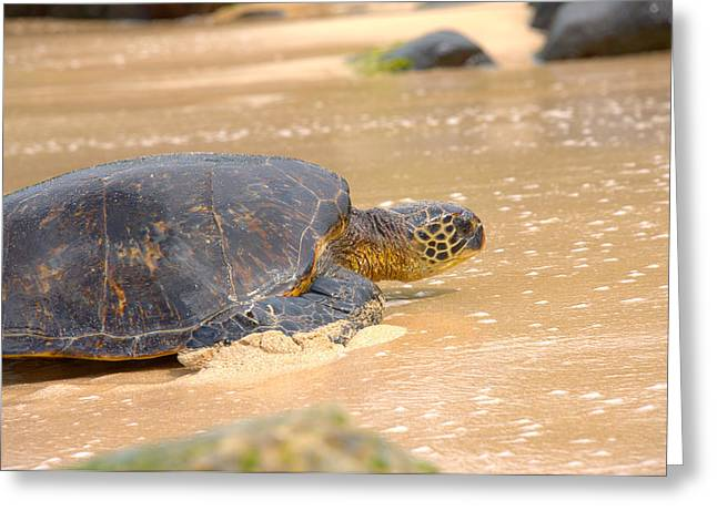 Pictures Of Sea Life Greeting Cards - Hawaiian Green Sea Turtle 2 Greeting Card by Brian Harig