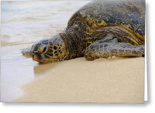 Pictures Of Sea Life Greeting Cards - Hawaiian Green Sea Turtle 3 Greeting Card by Brian Harig