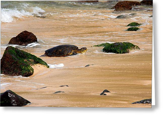 Hawaiian Green Sea Turtle Greeting Card by Brian Harig