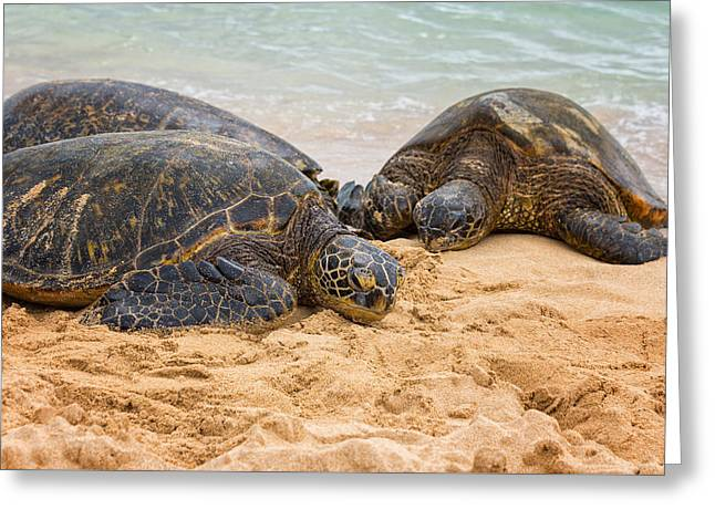 Sandy Greeting Cards - Hawaiian Green Sea Turtles 1 - Oahu Hawaii Greeting Card by Brian Harig