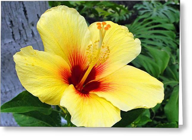 Hawaiin Greeting Cards - Hawaiian Hibiscus Greeting Card by Sue Melvin