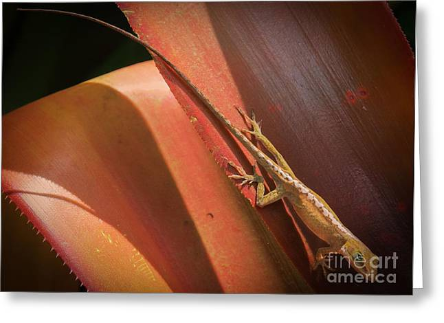 Photo . Portrait Greeting Cards - Hawaiian Lizard Greeting Card by Inge Johnsson