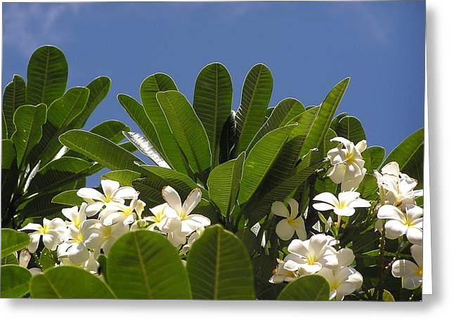 Hawaiin Greeting Cards - Hawaiian Plumeria Bunch Greeting Card by Jewels Blake Hamrick