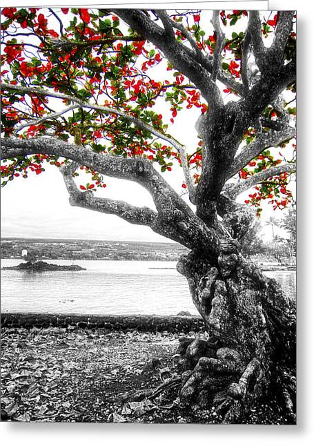 Ageless Greeting Cards - Hawaiian Red-leafed Tree Greeting Card by Daniel Hagerman