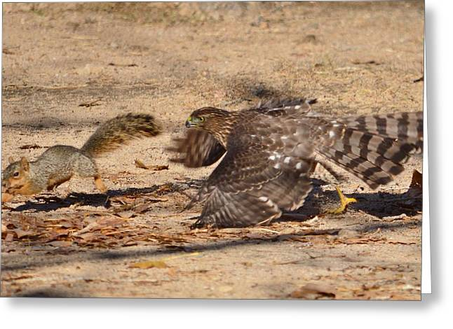 Hawk Creek Greeting Cards - Hawk Attack Greeting Card by Roy Hansen
