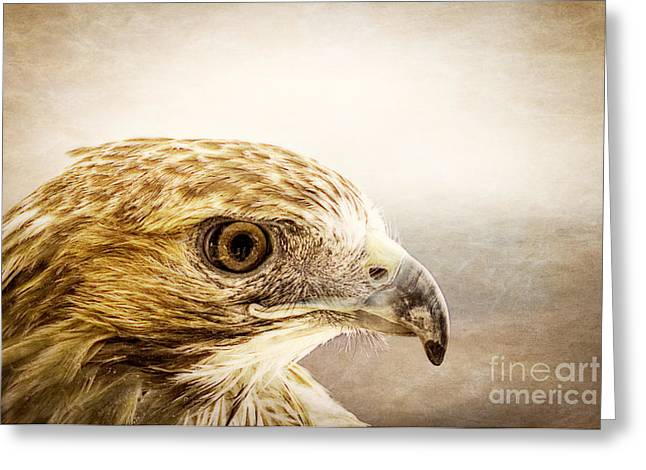 Hawk Bird Greeting Cards - Hawk Greeting Card by Edward Fielding