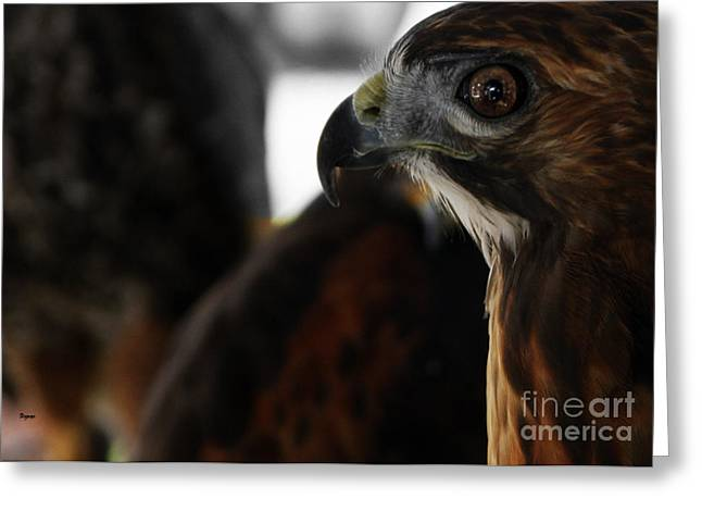 Redtail Hawks Greeting Cards - Hawk Eye Greeting Card by Steven  Digman
