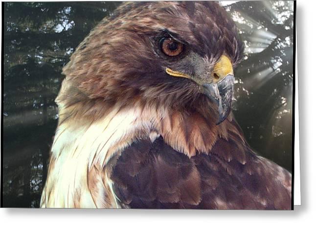 Statue Portrait Greeting Cards - Hawk Eye - Wildlife Art Photography Greeting Card by Ella Kaye Dickey