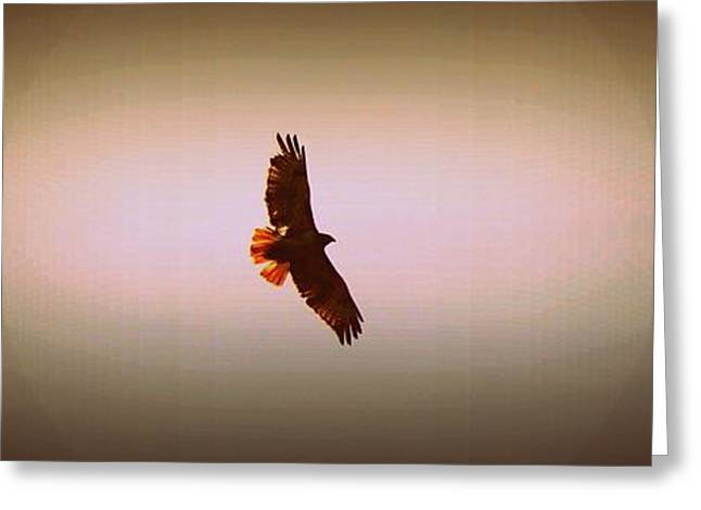 Hovering Greeting Cards - Hawk Eyes II Greeting Card by Augustina Trejo