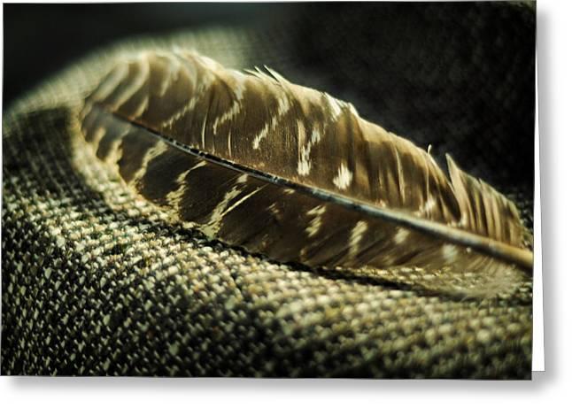 Menswear Greeting Cards - Hawk Feather  Greeting Card by Rebecca Sherman