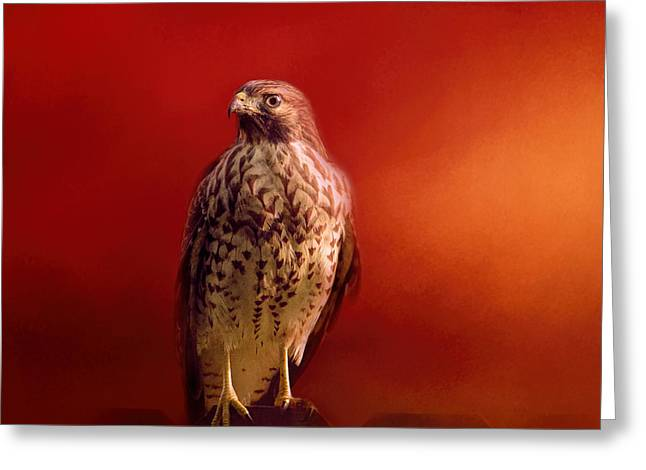 Red Shouldered Hawk Greeting Cards - Hawk On A Hot Day Greeting Card by Jai Johnson
