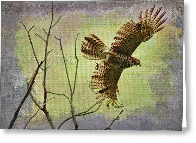 Raptor In Flight Greeting Cards - Hawk On The Hunt Greeting Card by Deborah Benoit