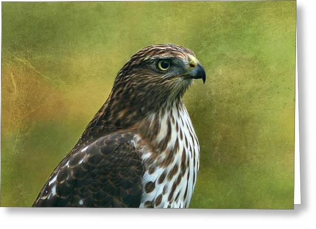 Indiana Art Greeting Cards - Hawk Portrait Greeting Card by Sandy Keeton