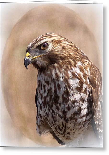 Hawk - Sphere - Bird Greeting Card by Travis Truelove