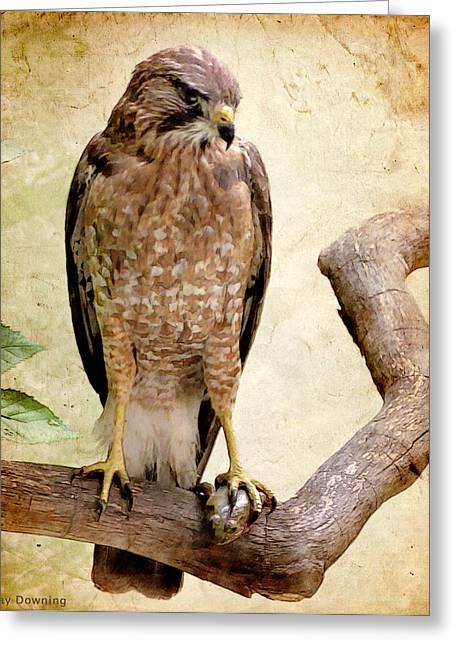 Americana Pictures Greeting Cards - Hawk with Fish Greeting Card by Ray Downing