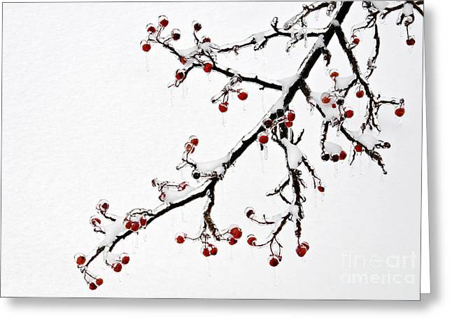 Hawthorn Ice And Snow - D004830 Greeting Card by Daniel Dempster