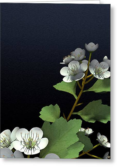 White Blossoms Greeting Cards - Hawthorne Greeting Card by Cynthia Decker