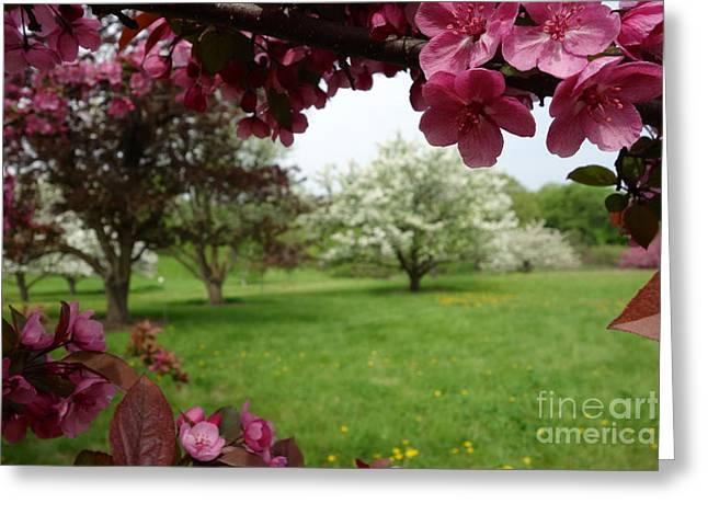 Springy Greeting Cards - Hawthorne Grove 2 Greeting Card by Jacqueline Athmann