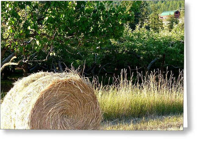 Apricot Greeting Cards - Hay Bale And Barn Greeting Card by Will Borden