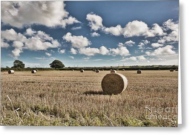 Harvest Time Greeting Cards - Hay Bales 1 Greeting Card by Steve Purnell