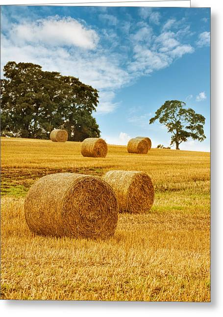 Straw Greeting Cards - Hay Bales Greeting Card by Amanda And Christopher Elwell