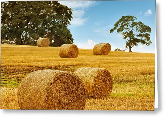 Hay Bales Greeting Card by Amanda And Christopher Elwell