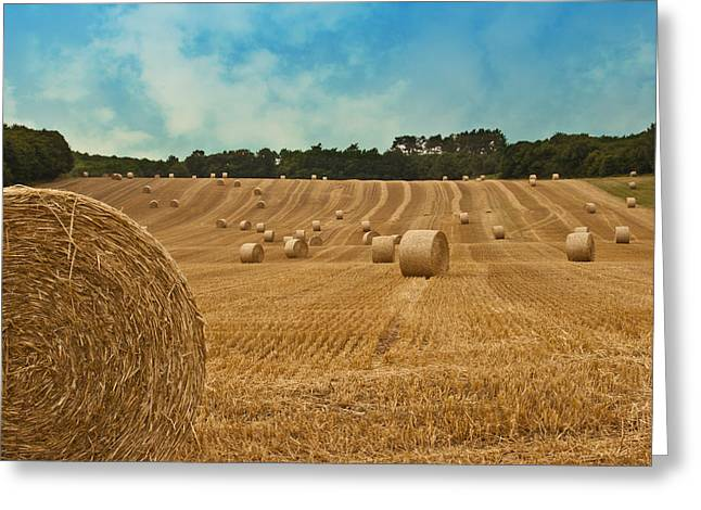 Hay Bales Greeting Cards - Hay Bales Greeting Card by Nomad Art And  Design