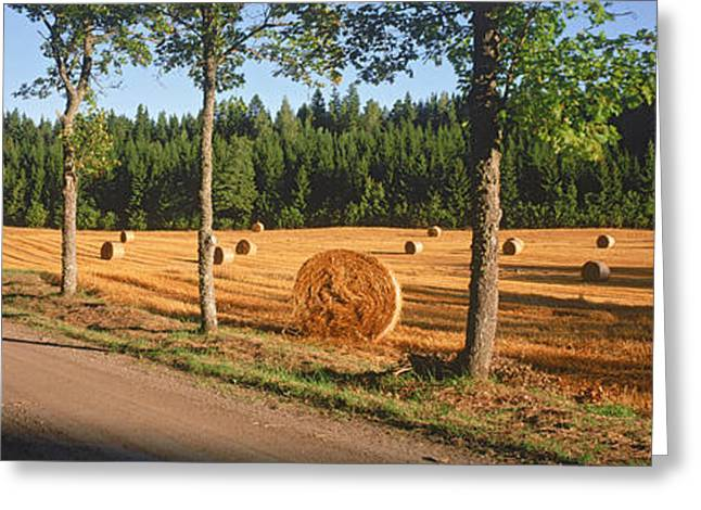 Bale Greeting Cards - Hay Bales In A Field, Flens, Sweden Greeting Card by Panoramic Images