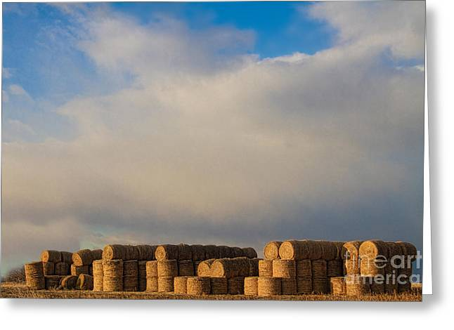 Hay Bales Greeting Card by James BO  Insogna