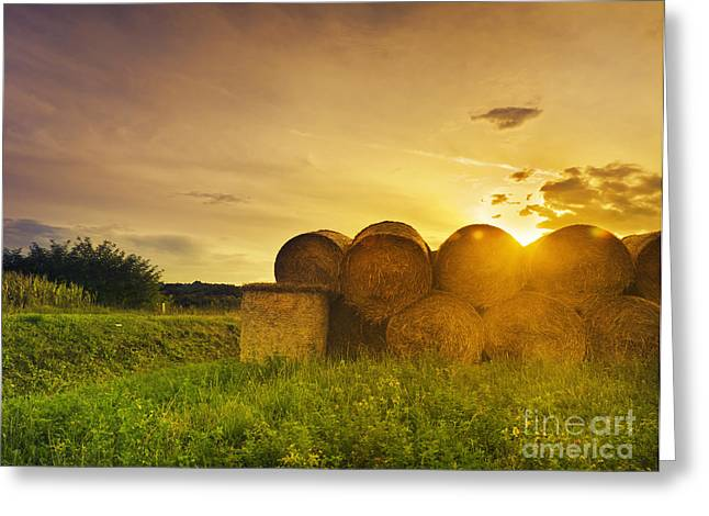 Summer Landscape Pyrography Greeting Cards - Hay Bales Greeting Card by Jelena Jovanovic