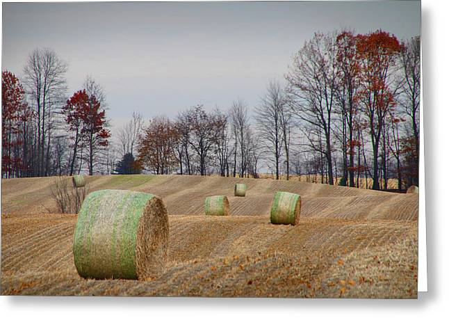 Harvest Art Greeting Cards - Hay Bales of Autumn Harvest Greeting Card by Randall Nyhof