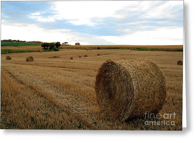 Hay Bales Greeting Cards - Hay Bales Greeting Card by Tim Holt