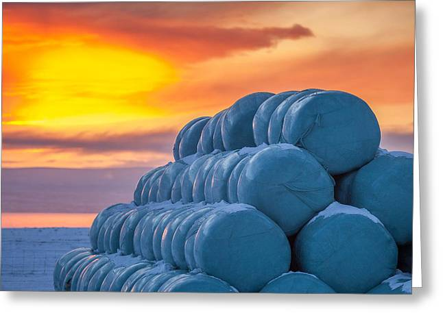 Hay Bales Wrapped In Plastic For Winter Greeting Card by Panoramic Images
