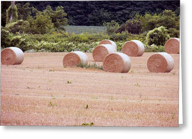 Ready For Harvest Greeting Cards - Hay Bales5 Greeting Card by Corinne Elizabeth Cowherd