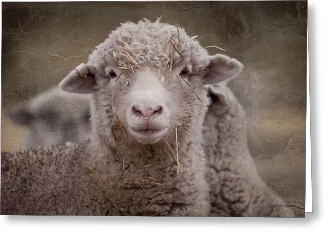 Hay Ewe Greeting Card by Michelle Wrighton