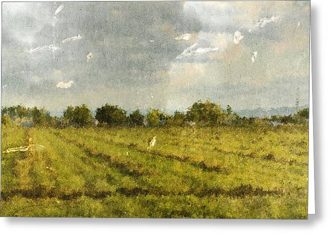 Hay Fields In September Greeting Card by Brett Pfister
