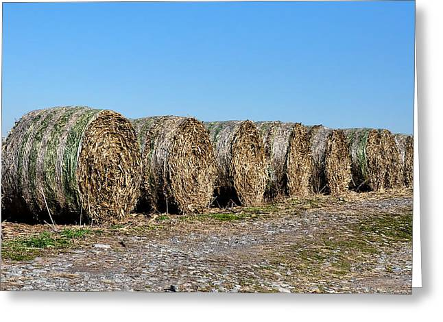 Hay Bales Greeting Cards - Hay Hay My My Greeting Card by Bill Cannon