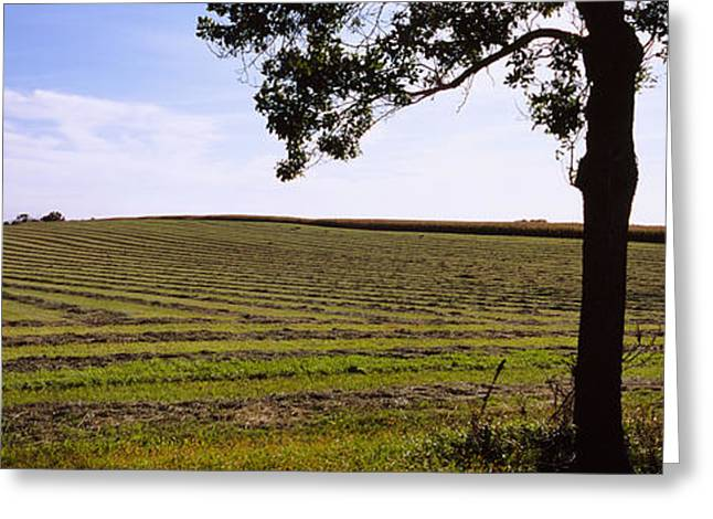 Field. Cloud Greeting Cards - Hay In A Field, Minnesota, Usa Greeting Card by Panoramic Images