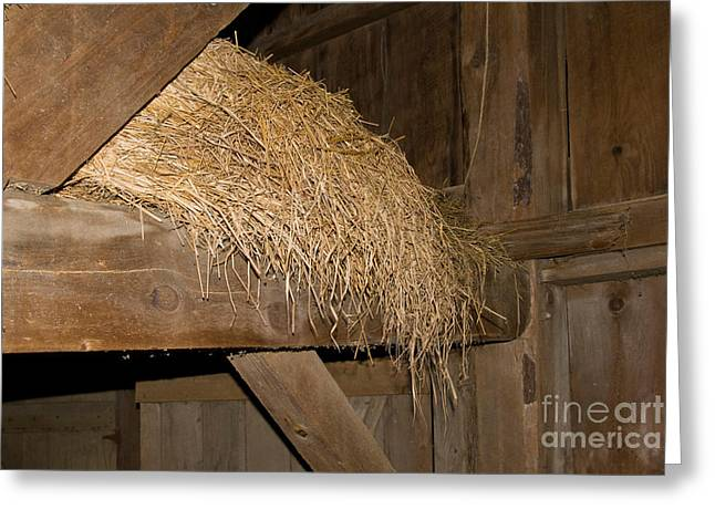 Dairy Barn Greeting Cards - Hay Loft Greeting Card by Richard and Ellen Thane