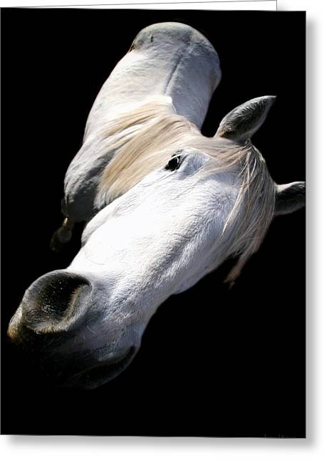 Horse Portrait Photographs Posters Greeting Cards - Hay There Greeting Card by Barbara D Richards