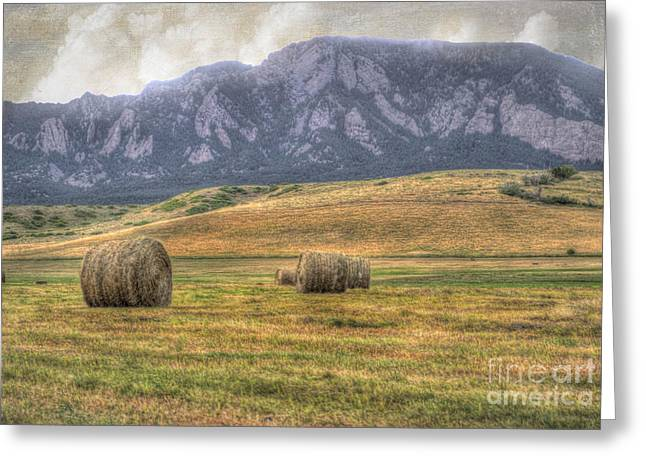 Bale Greeting Cards - Hay There Greeting Card by Juli Scalzi