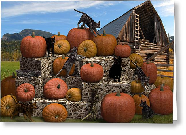 Black Cat Hills Greeting Cards - HayCats n Pumpkins Greeting Card by Jennifer Schwab
