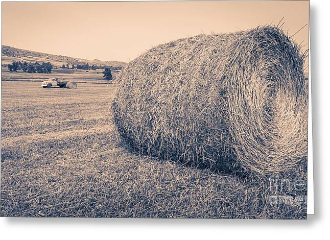Montana Mountains Greeting Cards - Haying the Field Greeting Card by Edward Fielding