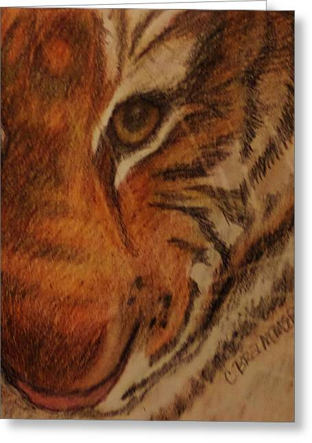 Bengal Drawings Greeting Cards - Hayleys Zoo Tiger Greeting Card by Christy Brammer